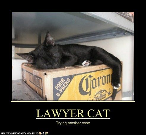 HUMOR'AGE –  Lawyer Cat