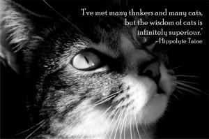 INSPIRATION – CAT WISDOM